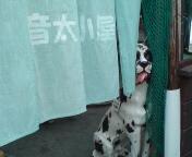 ホーボー日記(2008.7.11#1)