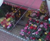 ホーボー日記(2009.12.12)